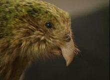 Lucy Rowe - Kakapo